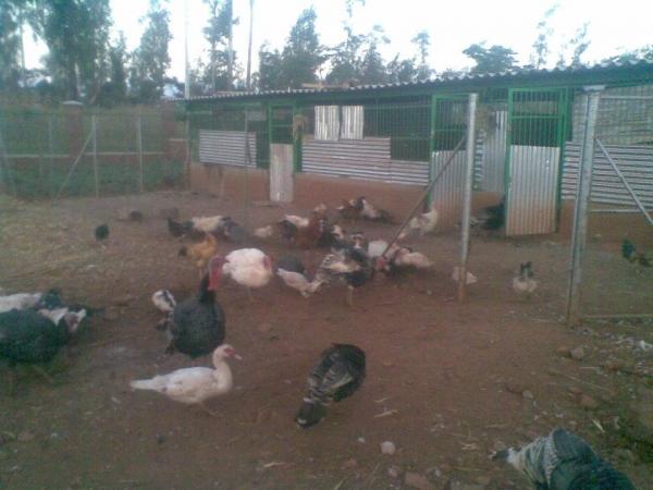 Ducks & Rabbits (Harare, Zimbabwe) - Phone, Address
